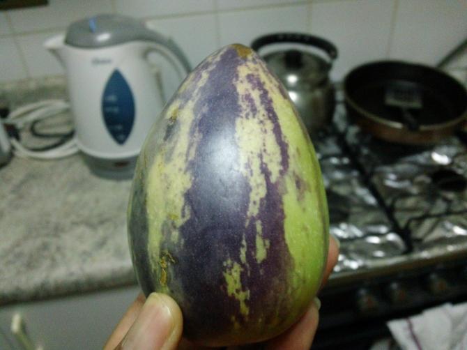 Pepino de Fruta